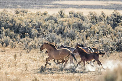 Red Dun Horse Photograph - Running Mustangs, No. 1 by Belinda Greb