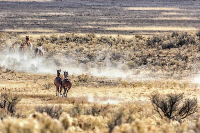Diamond Dust Photograph - Running Mustangs, No. 3 by Belinda Greb