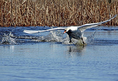 Photograph - Running On Water by Debbie Oppermann
