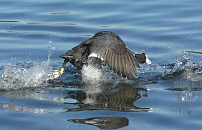 Photograph - Running On Water by Fraida Gutovich