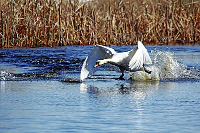 Photograph - Running On Water I by Debbie Oppermann