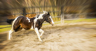 Wall Art - Photograph - Running Pinto by Michel Emery