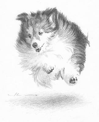 Running Sheltie Pencil Porrait Art Print by Mike Theuer