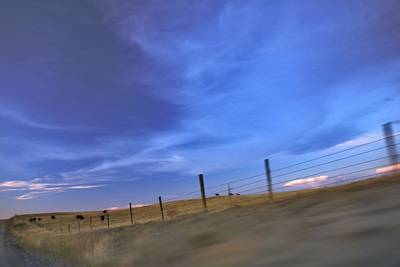 Photograph - Running The Fenceline by Amanda Smith