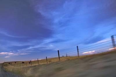 Photograph - Running The Fenceline by Amanda Smith