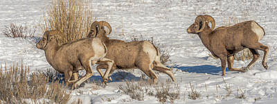 Photograph - Running The Rut by Yeates Photography