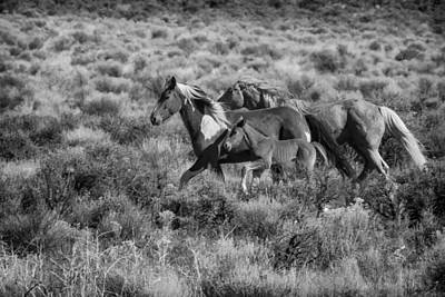 Photograph - Running Together Bw by Belinda Greb