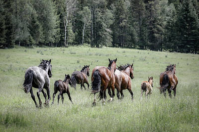 Photograph - Running Wild And Free by Athena Mckinzie