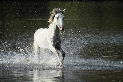 Photograph - Running Wild And Free Forever by Saija  Lehtonen