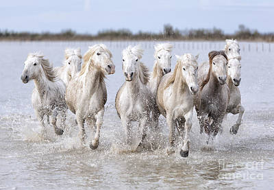Running Wild Horses Photograph by Marco Carmassi
