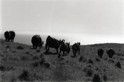 Photograph - Running With Cows by Erik Paul