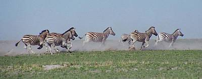 Photograph - Running Zebras by Bruce W Krucke
