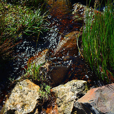 Photograph - Runoff 2 by Paul Davenport