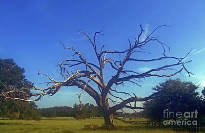 Photograph - Rural Death by D Hackett