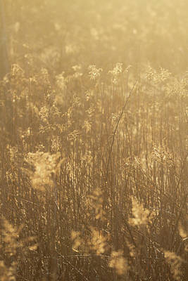 Photograph - Rural Field At Sunrise by Dan Sproul