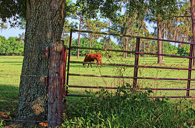 Photograph - Rural Florida by HH Photography of Florida