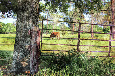Photograph - Rural Florida Life by HH Photography of Florida