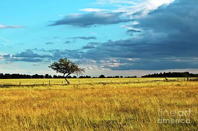 Photograph - Rural Idyll Poetry by Silva Wischeropp