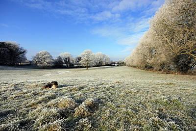 Rural Ireland In Winter Original by John Quinn