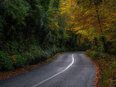 Photograph - Rural Irish Road Under Autumn Canopy by James Truett