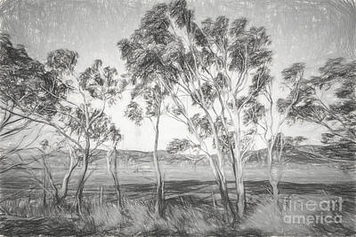 Gumtree Photograph - Rural Landscape Pencil Sketch by Jorgo Photography - Wall Art Gallery