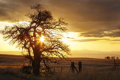 Photograph - Rural Oregon Sunset by Wes and Dotty Weber
