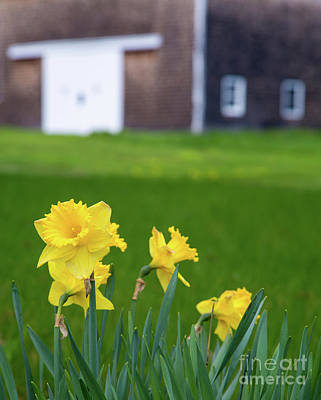 Photograph - Rural Spring by Karin Pinkham