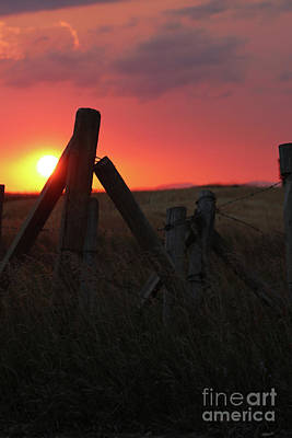 Photograph - Rural Sunset by Alyce Taylor