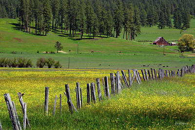 Photograph - Rural Yellow by Leland D Howard