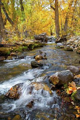 Photograph - Rushing Aspen Creek by Lynn Bauer