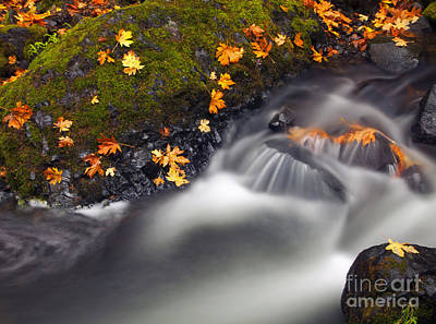 Photograph - Rushing Past The Season by Mike Dawson