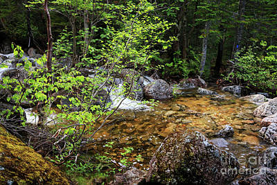 Photograph - Rushing Waters In Baxter State Park by Elizabeth Dow
