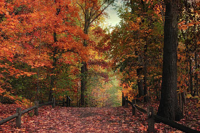 Woodland Trail Photograph - Russet Road by Jessica Jenney