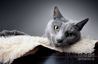 Vintage Diner Cars - Russian Blue Cat by Nailia Schwarz