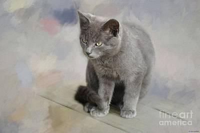 Photograph - Russian Blue Kitten by Eva Lechner