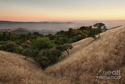 Bucolic Photograph - Russian Ridge In Summer by Matt Tilghman