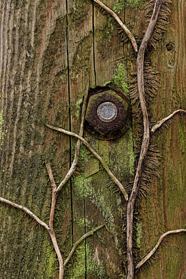 Photograph - Rust And Decay by Inge Riis McDonald