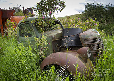 Photograph - Rust And Roses by Idaho Scenic Images Linda Lantzy