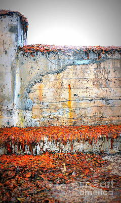 Photograph - Rust And Seaweed by Lexa Harpell