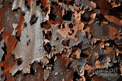 Photograph - Rust Pattern by Jacqueline M Lewis