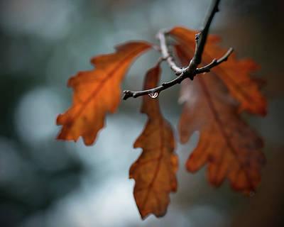 Photograph - Rust Orange Oak Leaves In The Rain by Brooke T Ryan