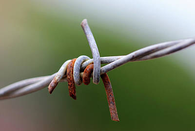 Photograph - Rusted Barb Wire by Prakash Ghai