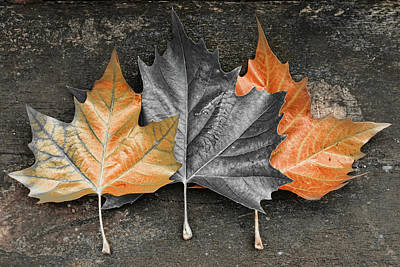Photograph - Rusted Leaves by Mihaela Pater