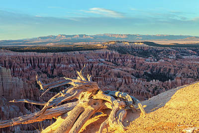 Photograph - Rusted Wood And Bryce by Jonathan Nguyen