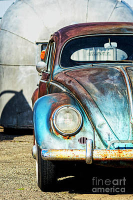 Photograph - Rustic Beetle  by Tim Gainey