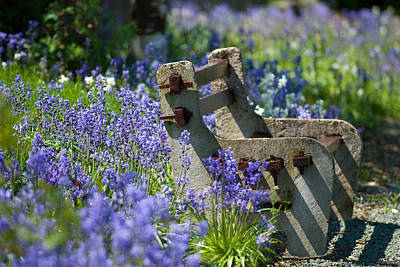 Hyacinths Wall Art - Photograph - Rustic Bench by Amanda Elwell