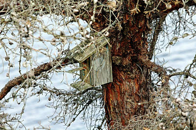 Photograph - Rustic Birdhouse by Debbie Oppermann