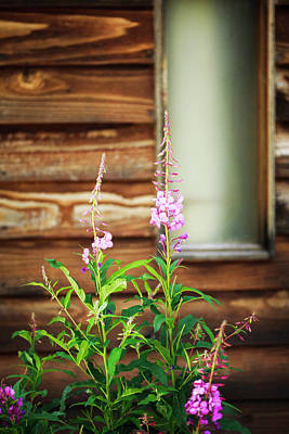 Photograph - Rustic Cabin And Flowers by Marilyn Hunt