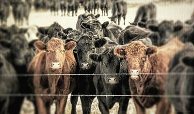 Photograph - Rustic Cattle Call by Jennie Marie Schell