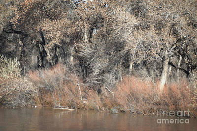 Photograph - Rustic Cottonwood Woodland by Andrea Hazel Ihlefeld
